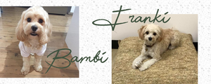 Meet our muses, Franki + Bambi