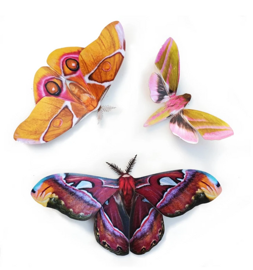 Moth and Myth Butterfly or Moth Set