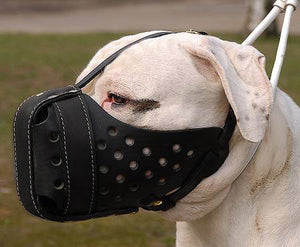 "The ""Fat Head"" Muzzle"