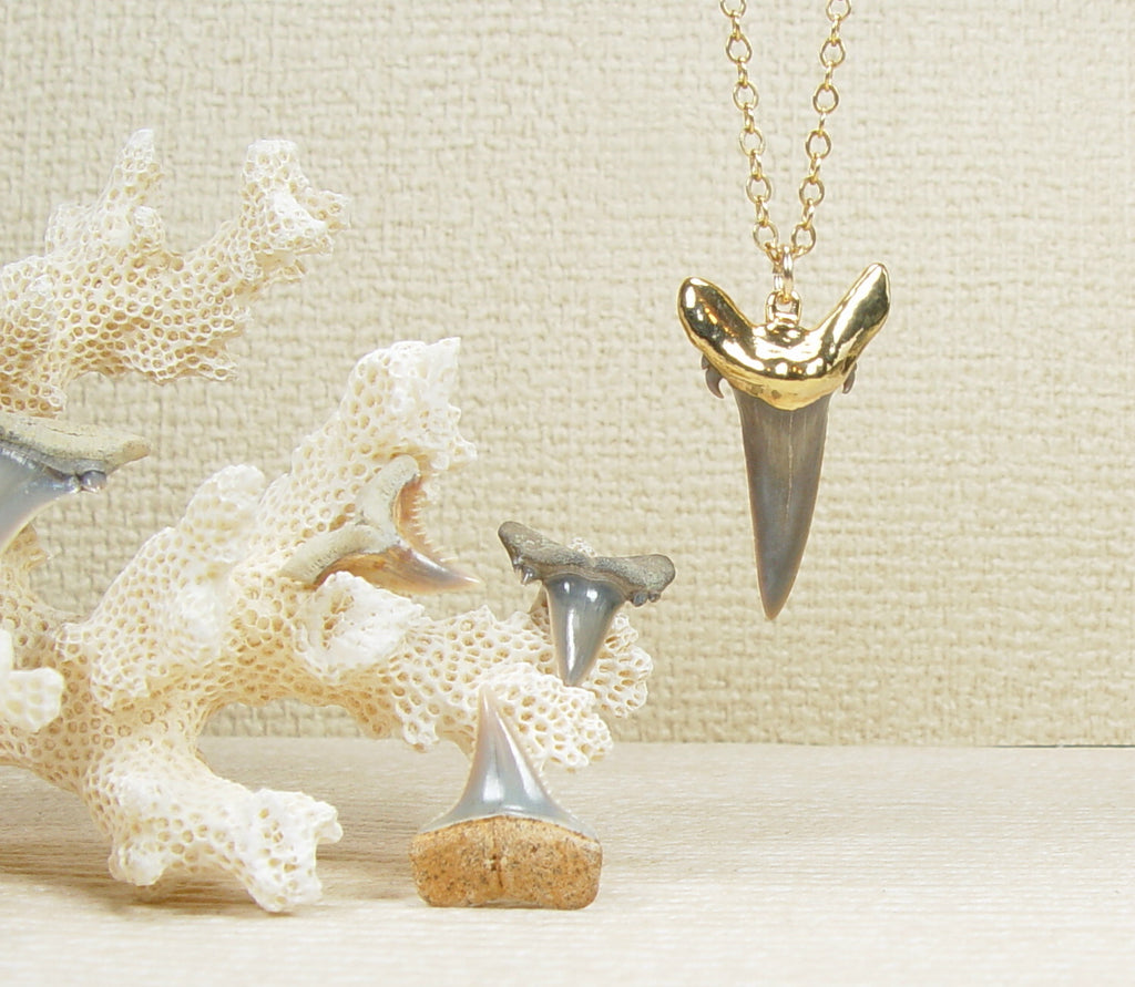 Shark Teeth Necklaces