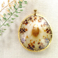 Polished Limpet Shell Pendant