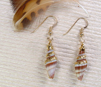 Spiral Sea Shell Earrings