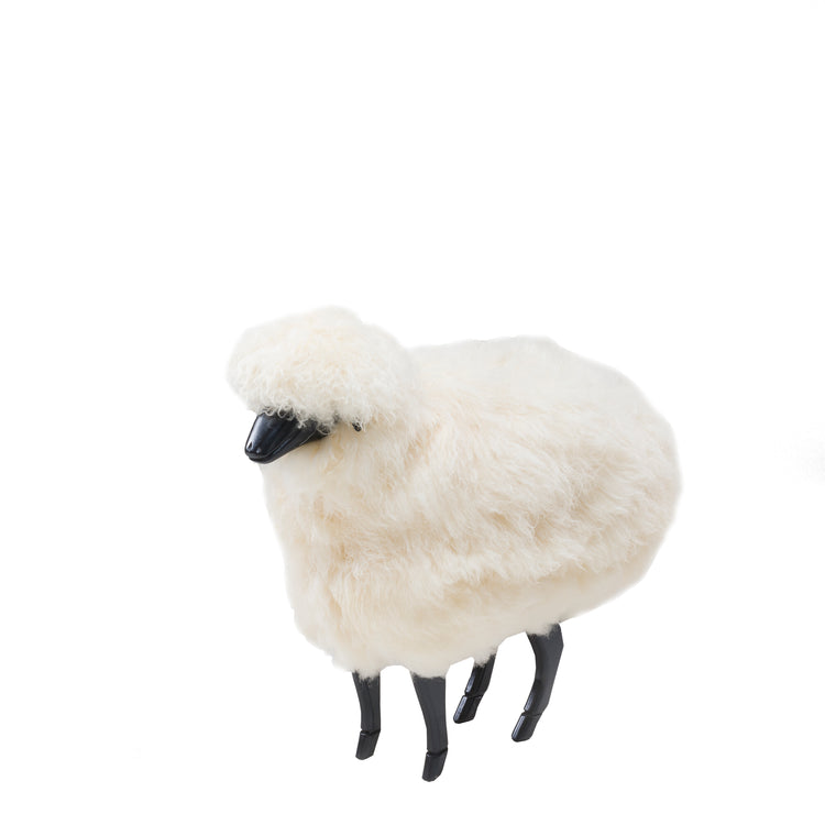 Harry Sheep