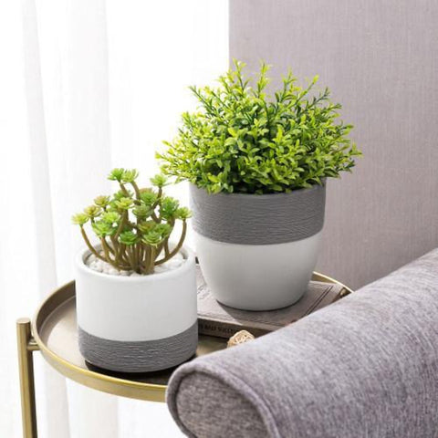 Plants on Side Table