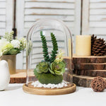 Clear Glass Cloche with Light Brown Wood Base