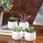 Mini Artificial Succulent Plants in Geometric Planter Pots