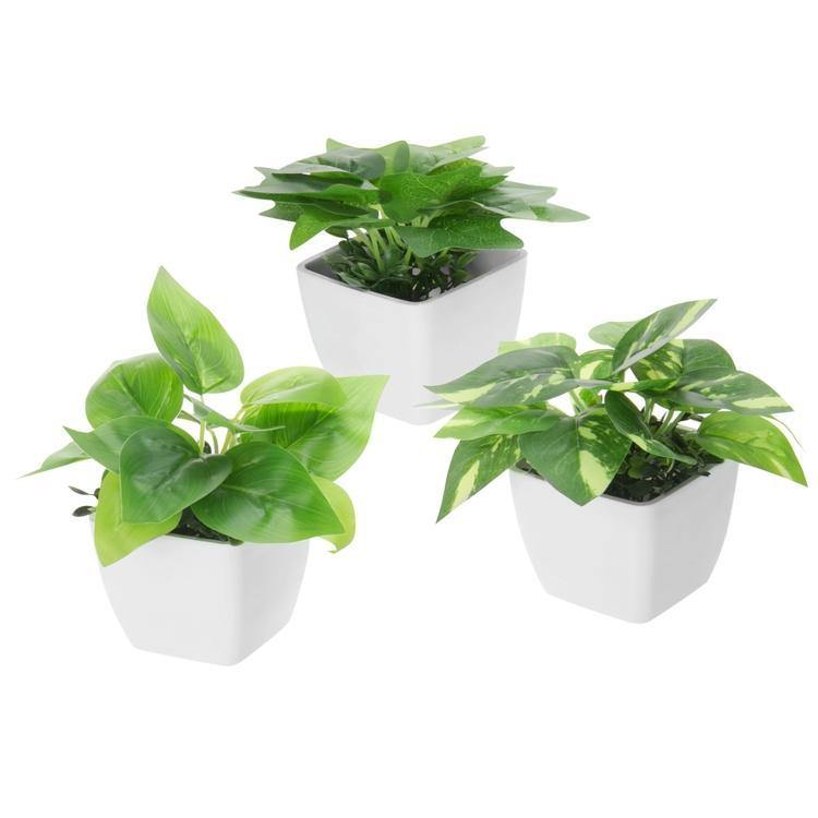 Mini Square Potted Plants Set of 3 - MyGift