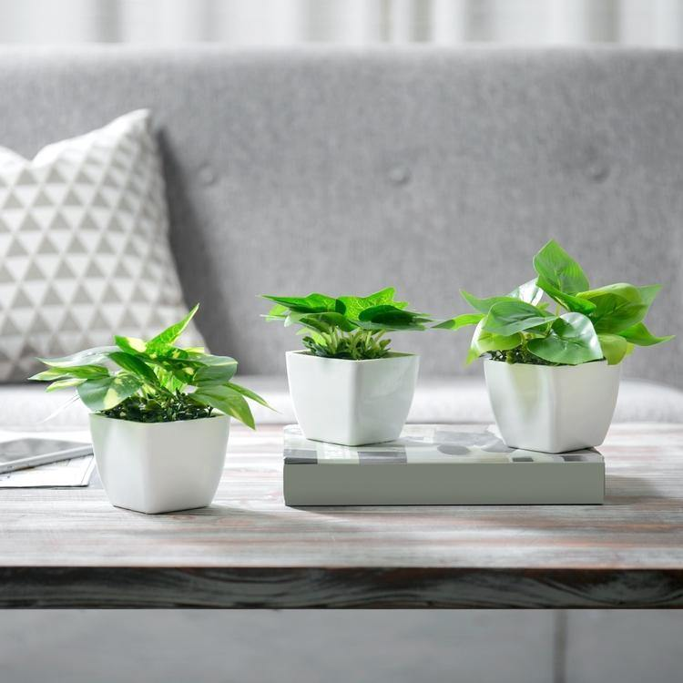 Mini Square Potted Plants Set of 3