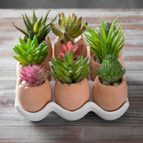 Set of 9 Brown Egg Design Ceramic Succulent Planters w/Tray