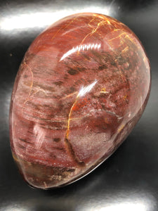 Petrified Wood Egg (XL) ~ grounding, integration, faith, I amness & balance (15)