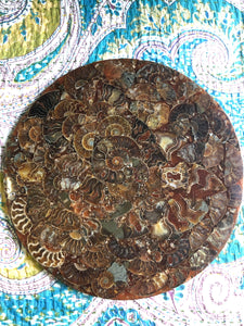 Ammonite Plate ~ Change, activates life force & path, abundance & cleanses energy
