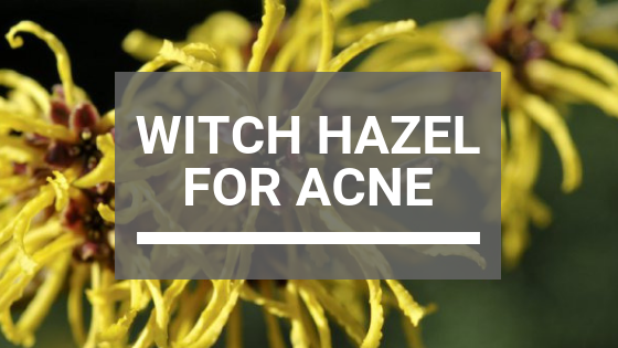 Witch Hazel for Acne