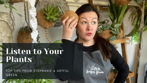 Listen to your Plants. How not to kill plants. Stephanie from Artful Green will show you how to save money and keep your plants alive.