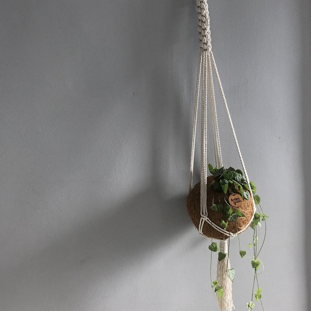 Plant Hanger by The Macramé Man