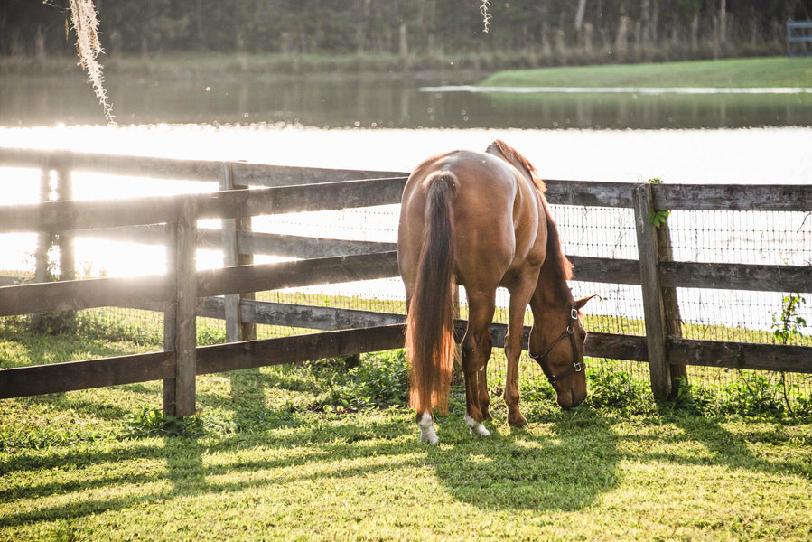 Why You Need NIGHTWATCH® — Even if Your Horse Lives in Your Backyard
