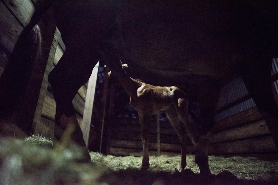 What You Need in Your 2020 Foaling Kit (Complete with Hacks)