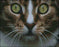 This is a photo of the Cat Close up in a diamond painting canvas.