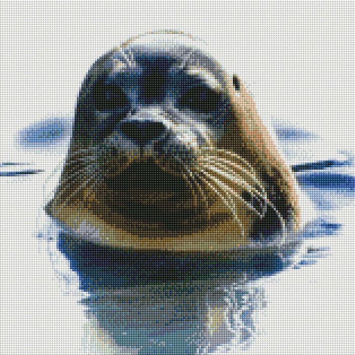 Cute Seal - Shimmer Stitch