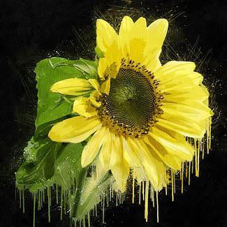 This is an artistic photo of a sunflower that looks like melting