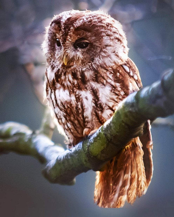 This is a photo of a sad brown owl on a tree branch