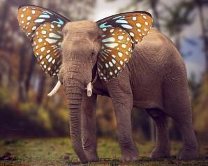 This is a photo of an elephant walking on a forest with butterfly wings on as it's ears