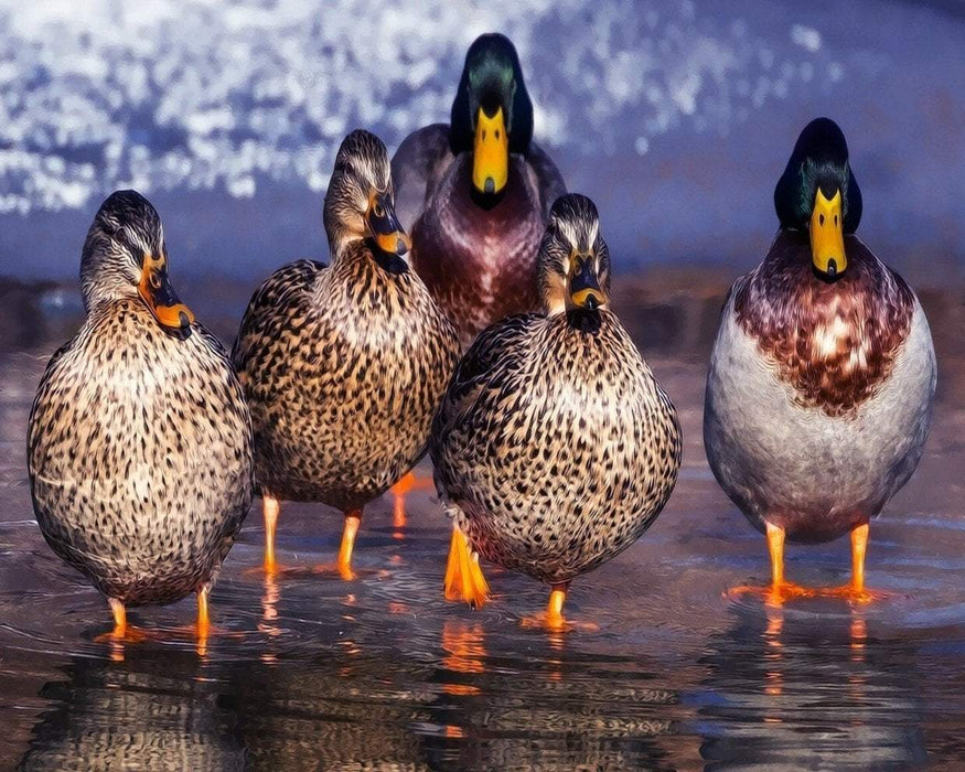 This is a photo of 5 ducks walking in the water.
