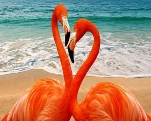 This is a photo of a flamingo heads forming aheart.