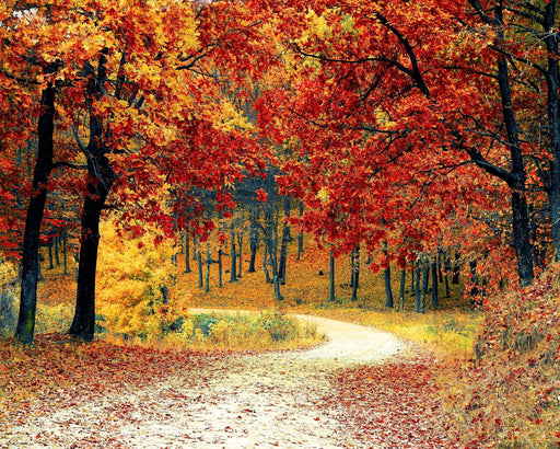 FREE Diamond Painting Kit: Autumn Park - Shimmer Stitch