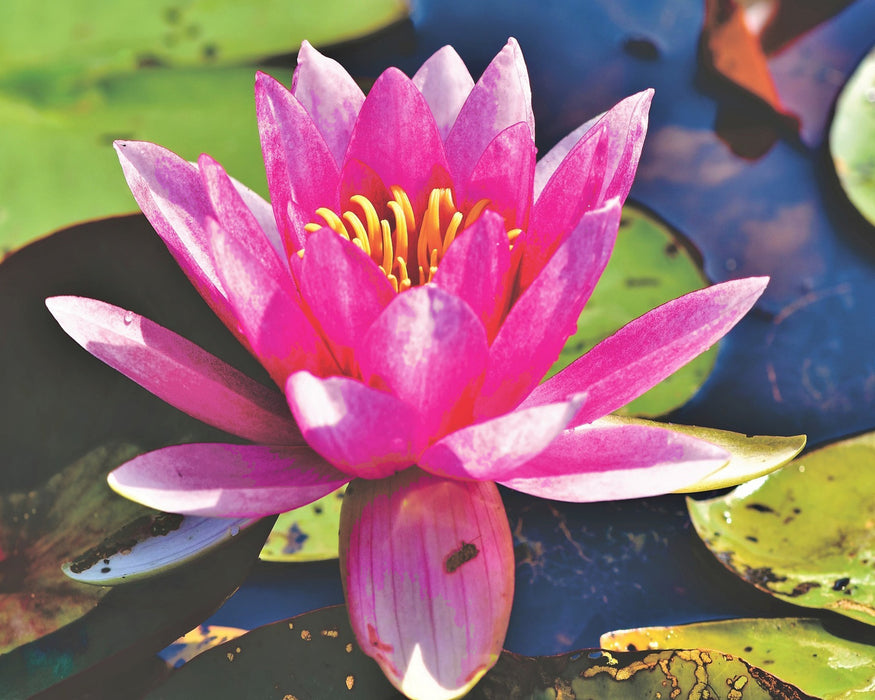 FREE Diamond Painting Kit: Lily Pad - Shimmer Stitch