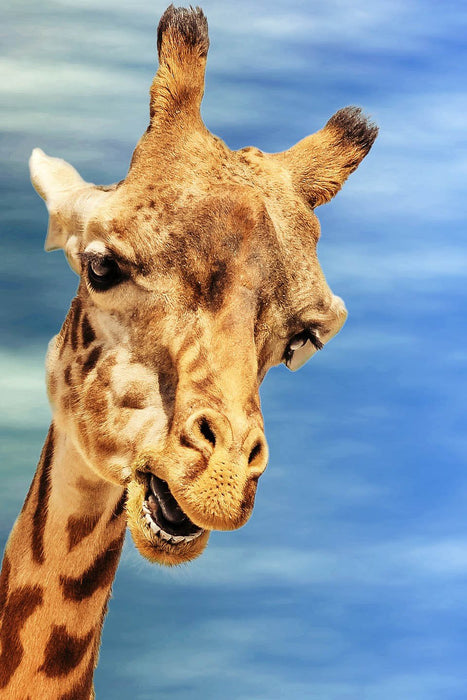 This is a photo (close up shot) of a face of a giraffe in a clear blue sky