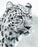 This is a photo of leopard head in black and white.