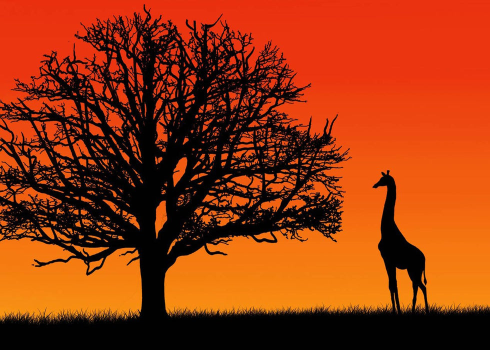 Evening Giraffe