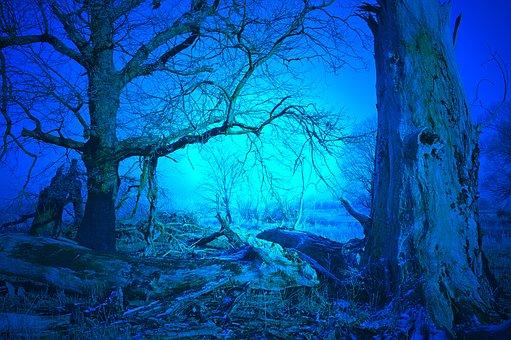 This is a photo of a blue forest