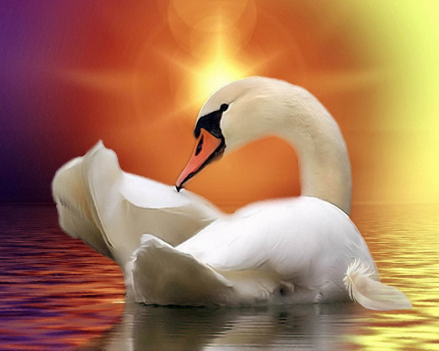 Swan on Colorful Water