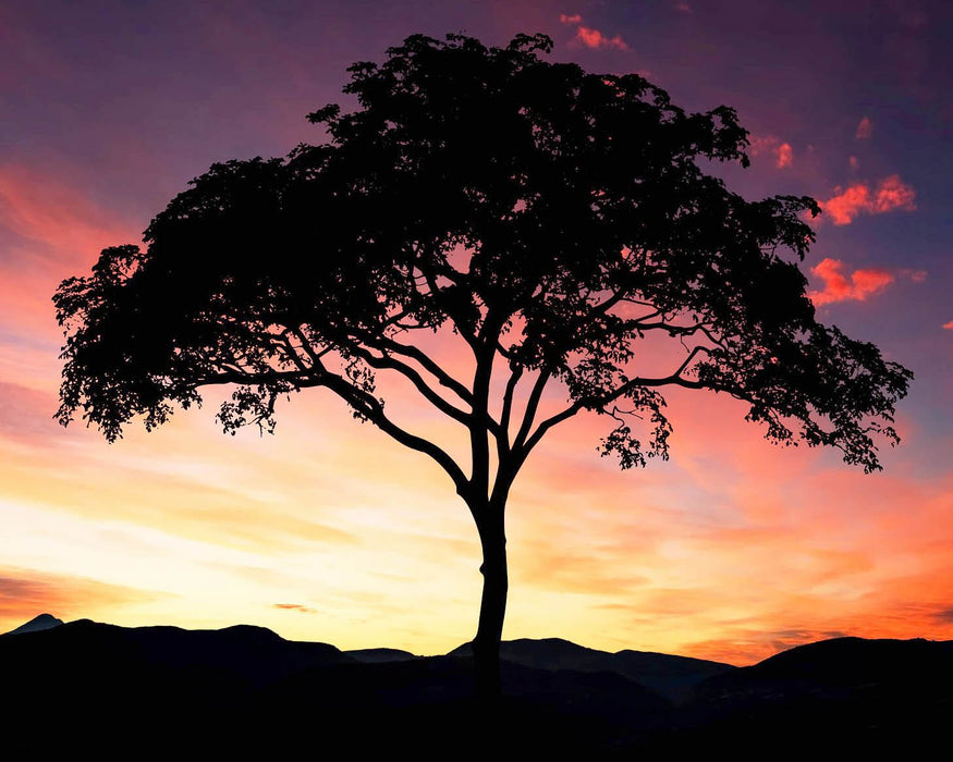 This is a photo of the a tree's silhouette in sunset, beautiful blue and pink skies.