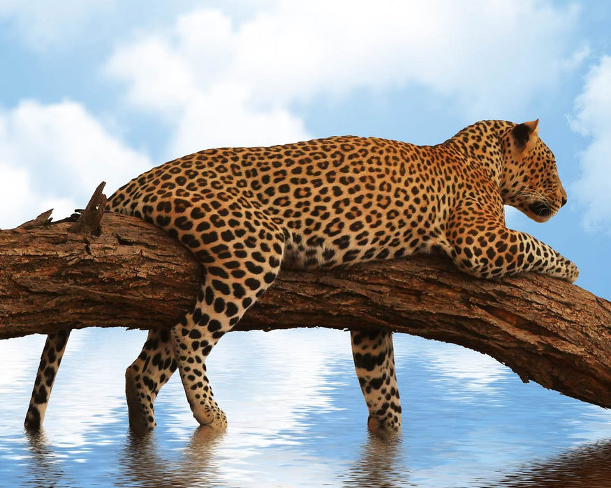 This is a photo of a Lazy Leopard on a Log