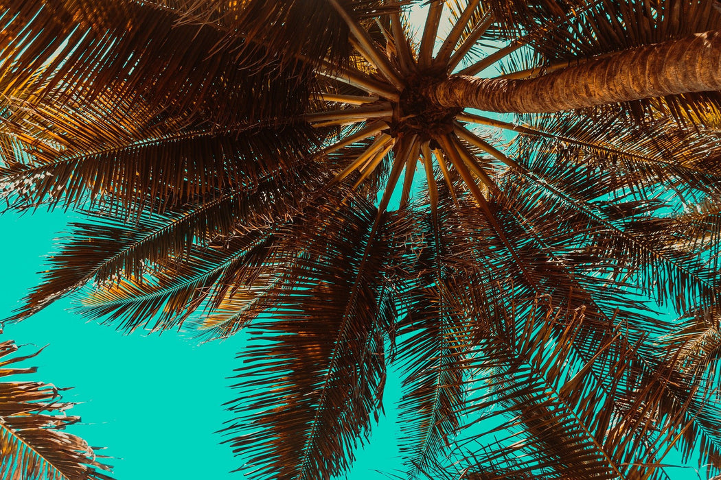 Looking Up Palms