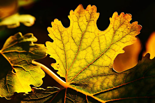 This is a close up photo of an autumn leaf