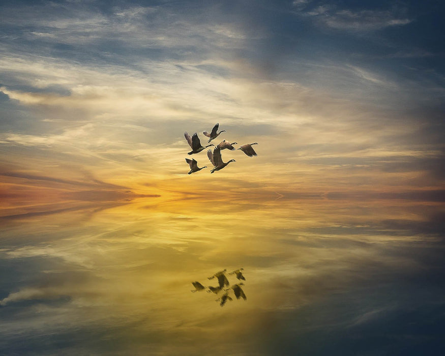 This is a photo of a sunset scene with a flock of birds flying in the sky.