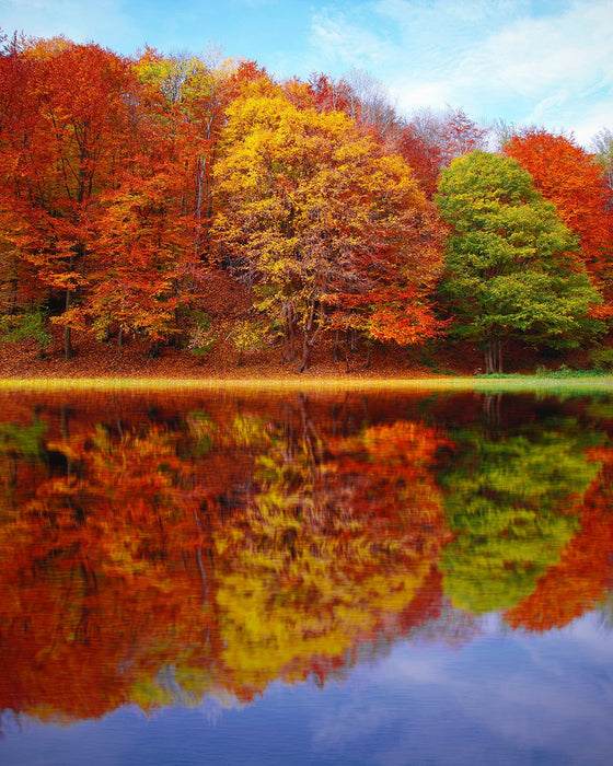Autumn Lake Trees