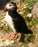 This is a photo of a puffin sitting on a rock.