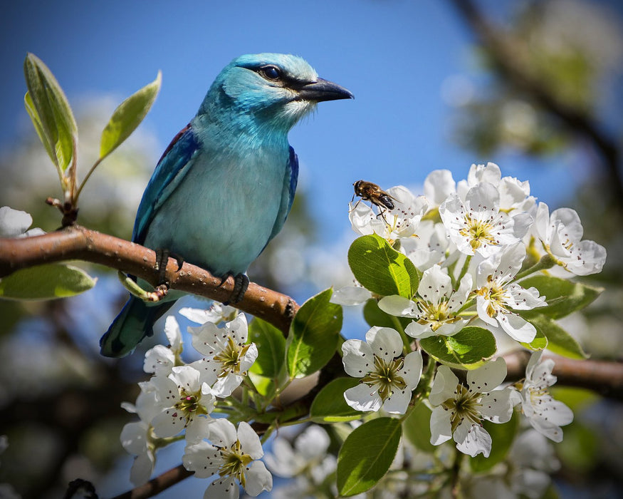 Bird in a Floral Tree