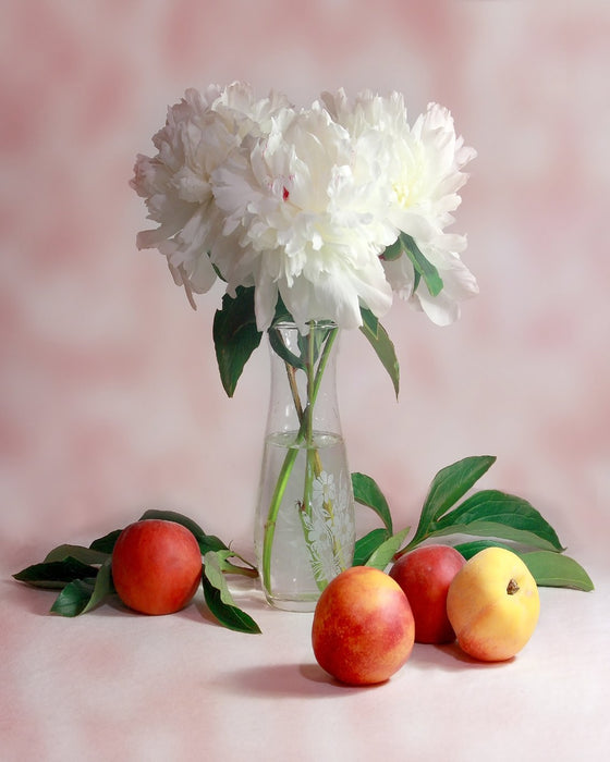 White Flower Still Life
