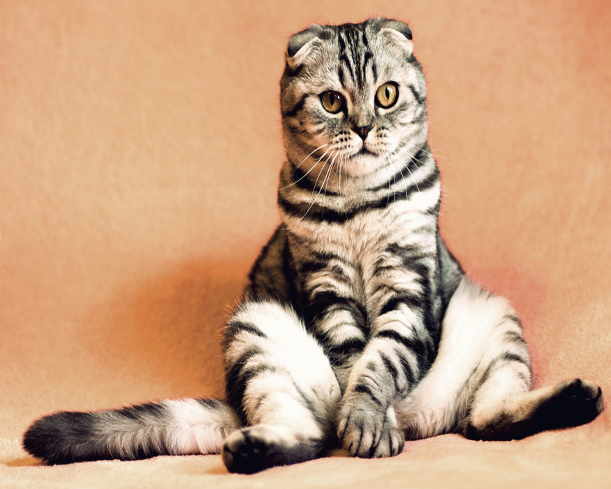 This is a photo of a funny sitting cat with a white, black and gray fur