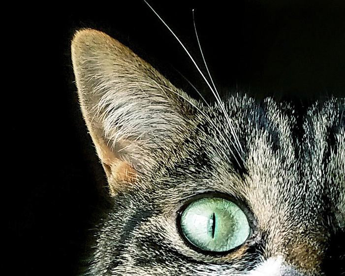 This is a photo of a cat eye with green eyes in black background.