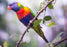 This is a photo of a bird with a green, violet, yellow, and red feathers sitting on a tree