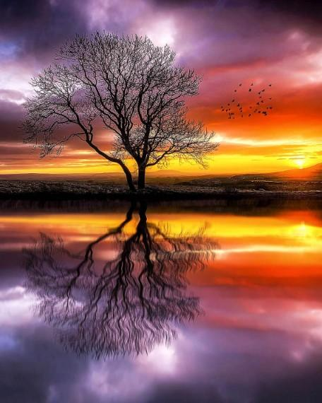 Cool Reflecting Tree