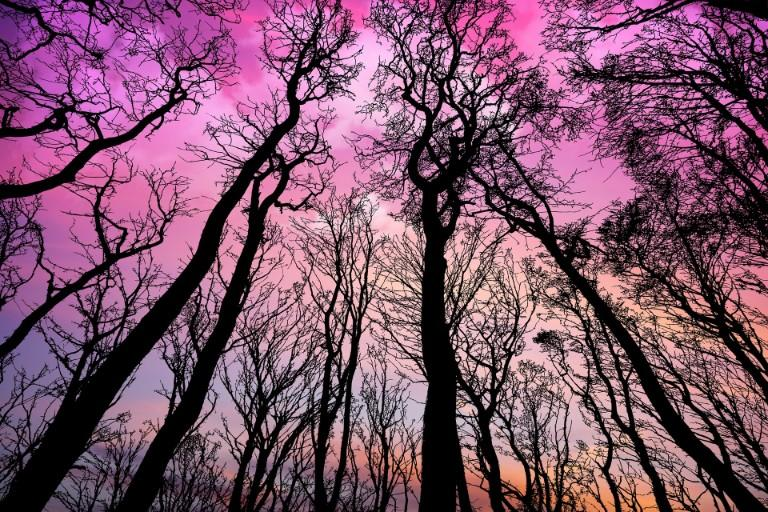 This is a photo of tall trees and colorful sunset skies.