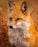 This is a photo of an Orange Fox