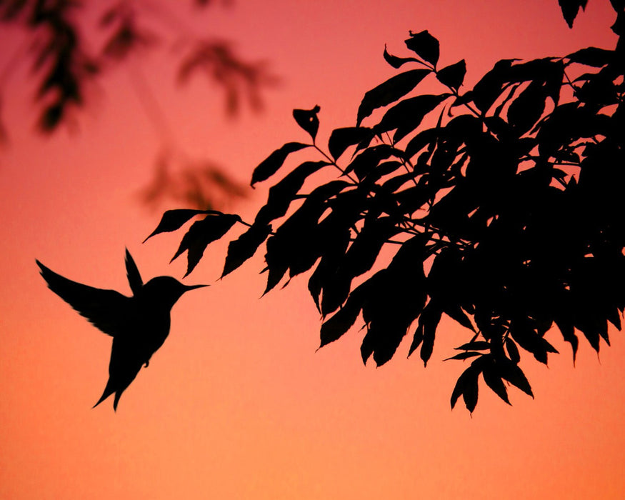 This is a photo of a silhouette of a hummingbird flying by the side of a tree branch in a pink night skies.